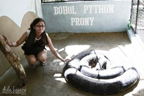 Largest Python in the