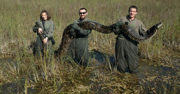 Florida puts bounty on pythons