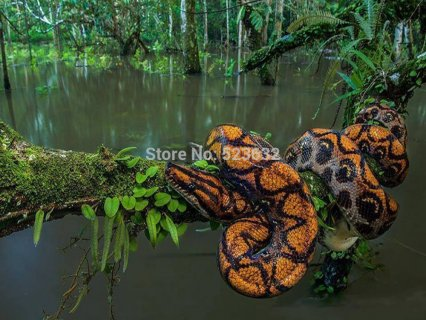 The forest python 40X30 Resin