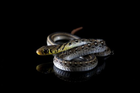 Snake Cell - more focused now!
