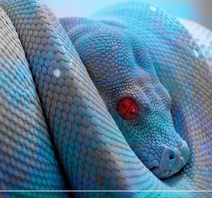 Blue Green Tree Python for sale
