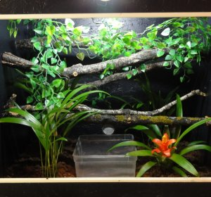 Green Tree Python enclosure