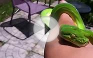 10 Different Green Tree Pythons & Emerald Tree Boas