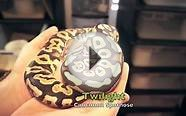 Ball Python Breeding Projects 2013-14