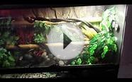 Green tree python enclosure with water feature