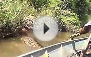 Is This Largest Snake In The World? Anaconda Snake!!