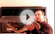 Jampea Reticulated Python Update