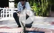 Raw Video: Giant python shows up in family pool