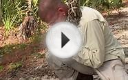 WATCH: Longest Burmese Python Gives Us Reason to Never